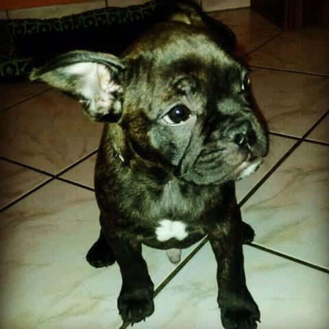Das ist der kleine Paco  - (Hund, Blut, Impfung)