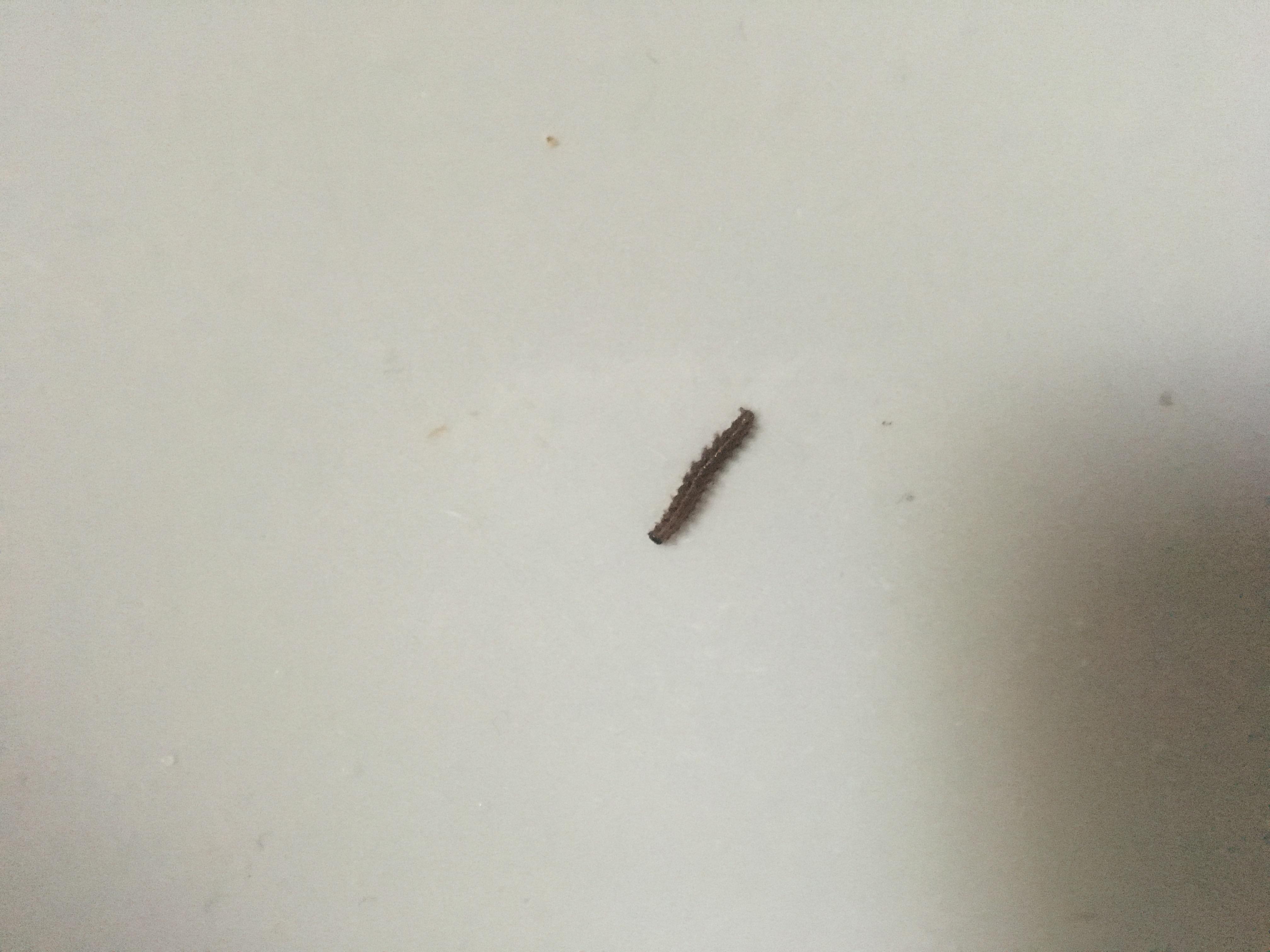Hilfe Zuhause Im Badezimmer Was Ist Das Für Eine Raupe/ Maden? (Insekten,  Zu Hause, Würmer)