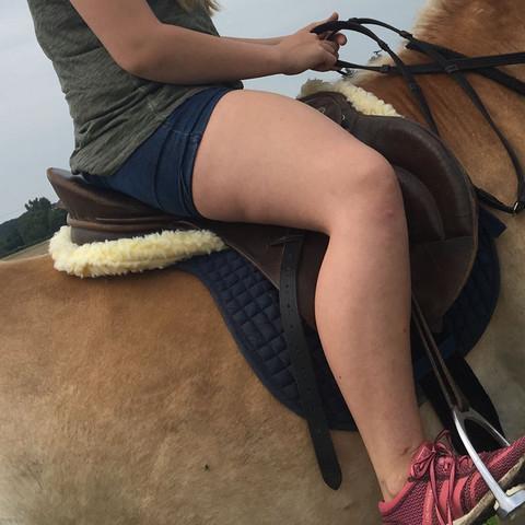 Das sattelkissen - (Tiere, Pferde, Reitbeteiligung)