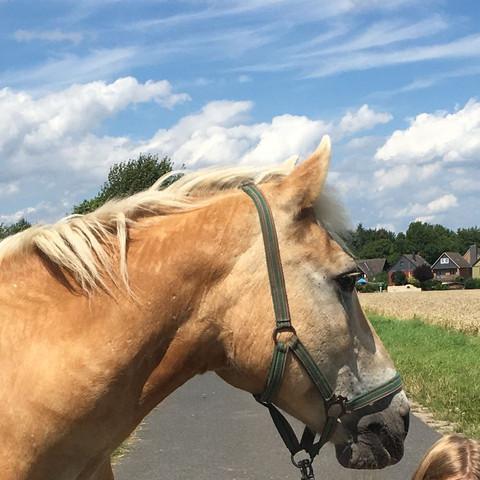 Er nochmal - (Tiere, Pferde, Reitbeteiligung)