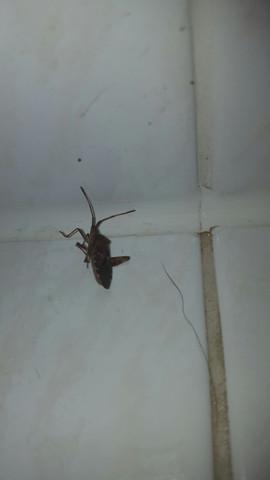 Bild 1  - (Tiere, Insekten, was ist das)