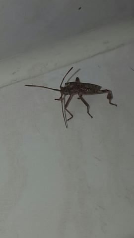 Bild 2 - (Tiere, Insekten, was ist das)
