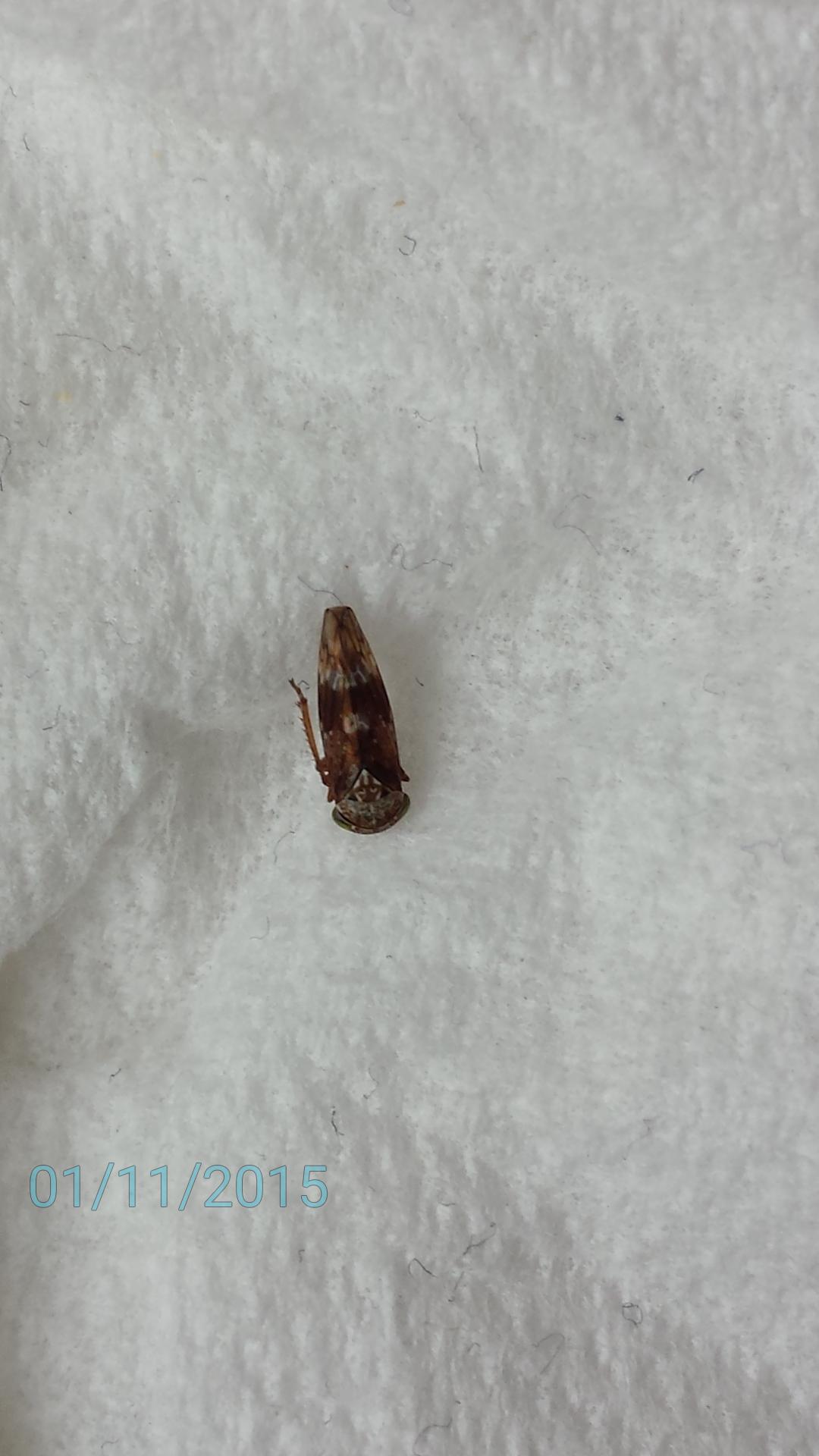 hilfe ich habe heute diese kleine insekten in der wohnung gesehen k nnte mir villeicht. Black Bedroom Furniture Sets. Home Design Ideas