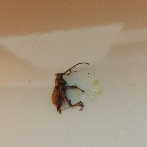Käfer seitlich  - (Tiere, Tod, Fragen)