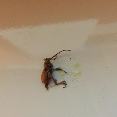 hilfe welches insekt ist das tiere tod insekten. Black Bedroom Furniture Sets. Home Design Ideas