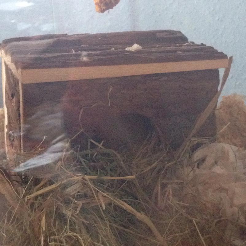 Holz Haus Haensler: Holz Haus Für Hamster Schlecht?