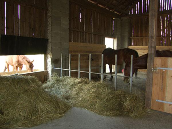 holz oder metall pferdestall pferde reiten pferdehaltung. Black Bedroom Furniture Sets. Home Design Ideas