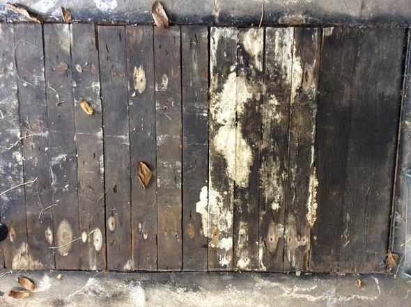 Ölgrubbe - (Holz, Schimmel, Vermodert)