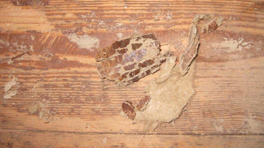 Quietschender Holzfußboden ~ Wohnen nächtlicher sex auf quietschender schaukel ist