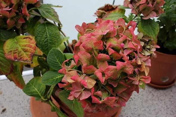 Blüte und Trieb - (Garten, Pflanzen, Blumen)