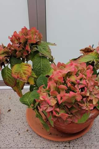 gesamt - (Garten, Pflanzen, Blumen)