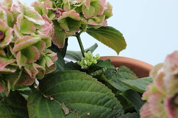 neue Blüte - (Garten, Pflanzen, Blumen)