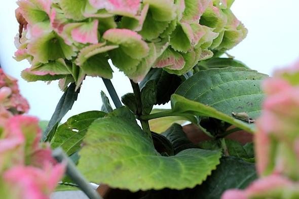 Trieb - (Garten, Pflanzen, Blumen)