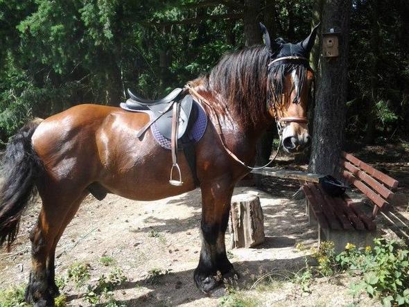 Hübsche Frisuren Für Pferde Mit Mittellanger Mähne Frisur Schweif