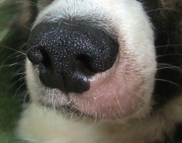 Hündin Schnauze Fellausfall Parasitten Futtermittelallergie Hund