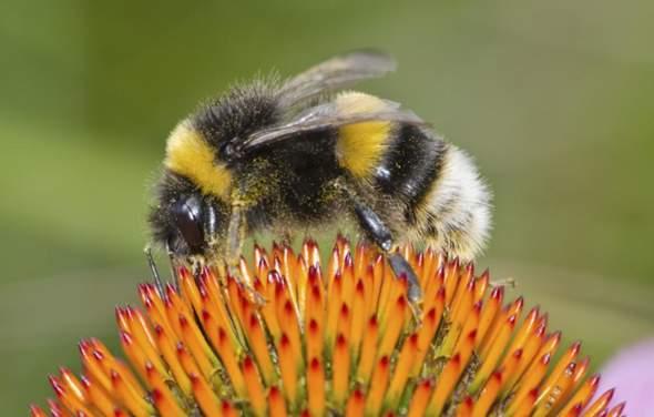 Hummeln gehören ja auch zur Bienen art können die auch irgendwie stechen oder beißen??