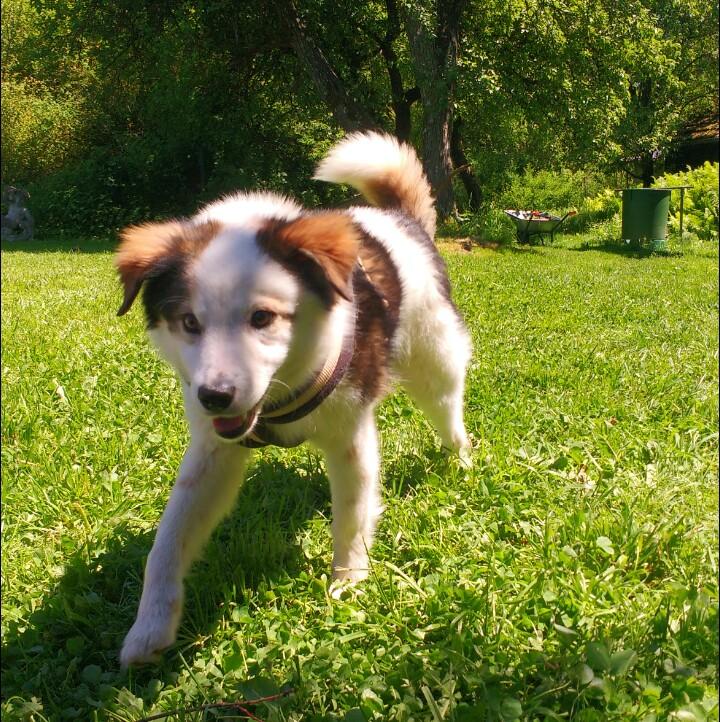 Hund Rumänien