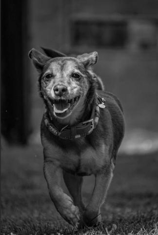 Hund beim rennen richtig fotografieren?