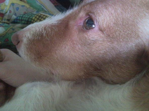 Lefze 1 - (Medizin, Hund, Tierarzt)