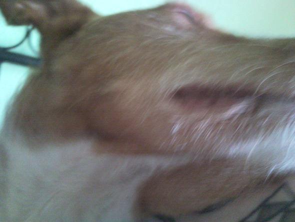 Lefze 2 - (Medizin, Hund, Tierarzt)