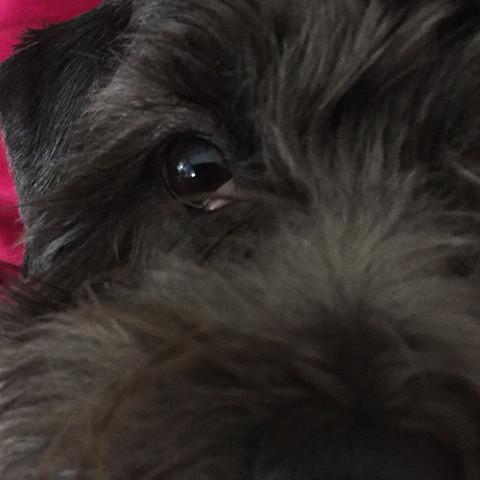 Bilder - (Hund, Augen, krank)
