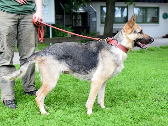 Die Hündin - (Hund, Tierarzt, Tierheim)