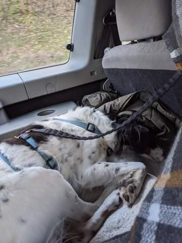 Hund im Auto sichern wie?