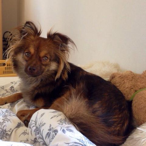 Hund Ist Aggressiv Gegenüber Besuchern Und Allgemein Fremden