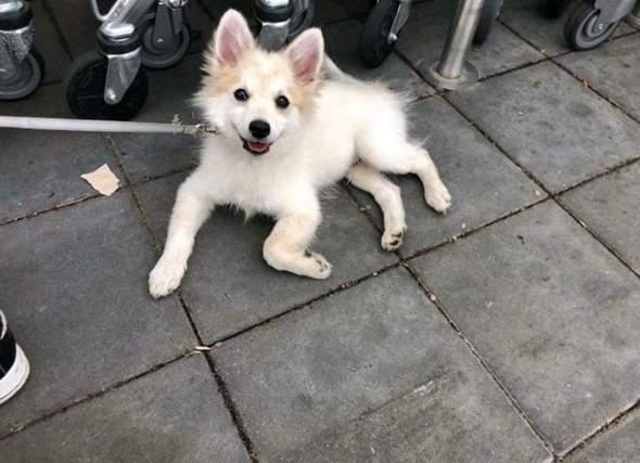 Hund kaufen auf Kleinanzeigen was beachten?