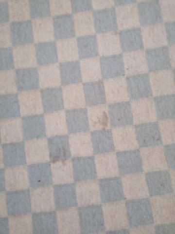 Hund kotzte auf Teppich. Wie kriege ich den Fleck raus?