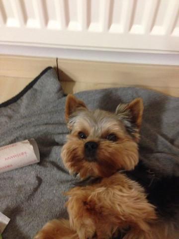 Hund Leckt Immer Linke Vorderpfote Lecken Pfote