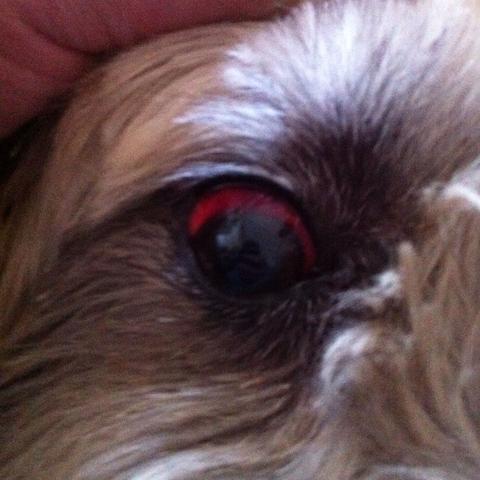 Knallrot - nicht normal  - (Gesundheit, Tiere, Hund)