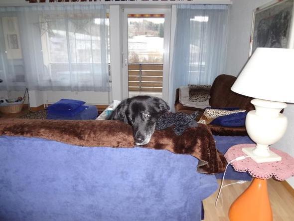 hund verliert ab und zu urin in der wohnung tiere. Black Bedroom Furniture Sets. Home Design Ideas