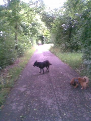 Stella und Chicco - (Hund, Hundepflege)
