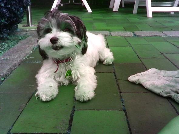 Loucy mit Stöckchen ^-^ - (Hund, Baby, Welpen)