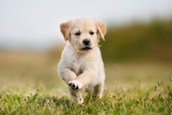 - (Hund, hundenamen)