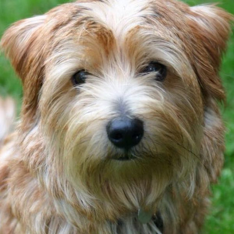 Hunddd - (Hund, Hunderasse)