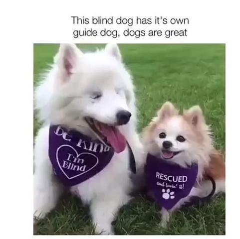 ----- - (Hund, Rasse, Hunderasse)