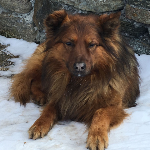 Das ist der süsse Hund, von dem wir die Rasse herausfinden wollen😍 - (Fragen, Hunderasse)