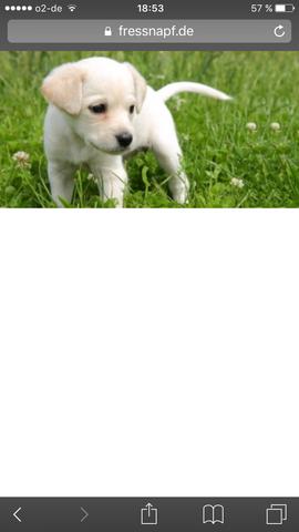 Süßer hund - (Tiere, Hund, Brauche Hilfe)
