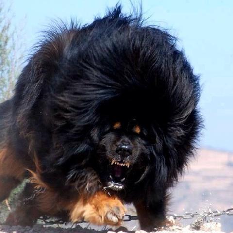 Hunderassegesucht Tiere Hund Haustiere