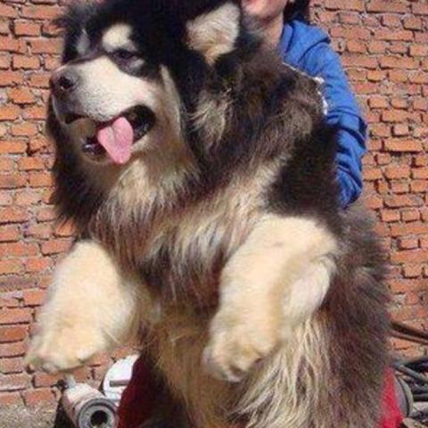 Wie heißt diese Hunderasse? - (Tiere, Hund, Haustiere)
