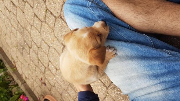 Welpe - (Hund, Welpen)