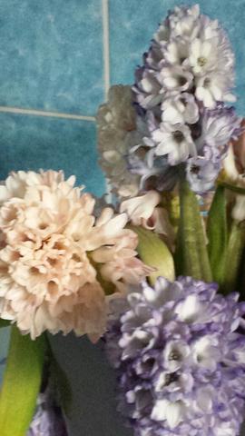 Blumen vom Markt - (Blumen, pflegen, Schnittblumen)