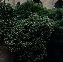 Der Baum - (Pflanzen, Baum, Botanik)