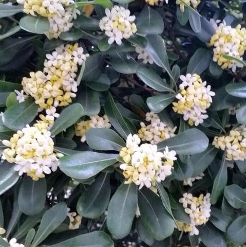Die Blüten - (Pflanzen, Baum, Botanik)