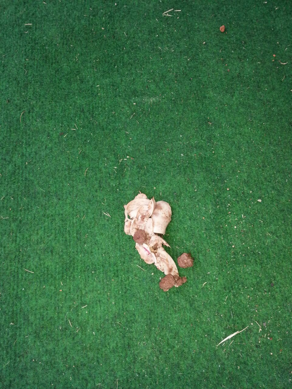 Ich bin vorhin in den garten gegangen und da lagen die - Kot im garten von welchem tier ...