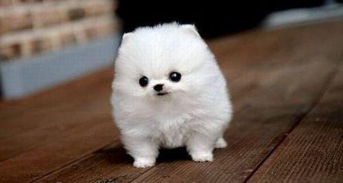 der ist so süß und knuffig  - (Hund, Hunderassen)