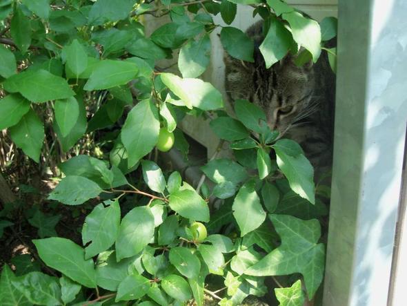 Kätzchen … :o) - (Katze, Name, Katzen)