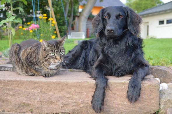 Meine beiden Lieblinge ❤️❤️❤️ - (Angst, Hund, trinken)